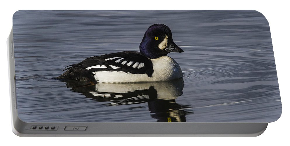 Doug Lloyd Portable Battery Charger featuring the photograph Barrows Goldeneye by Doug Lloyd