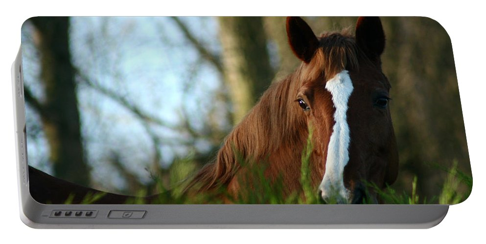 Chestnut Horse Portable Battery Charger featuring the photograph Behind The Fence by Angel Ciesniarska