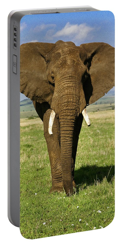 Africa Portable Battery Charger featuring the photograph Big Boy by Michele Burgess