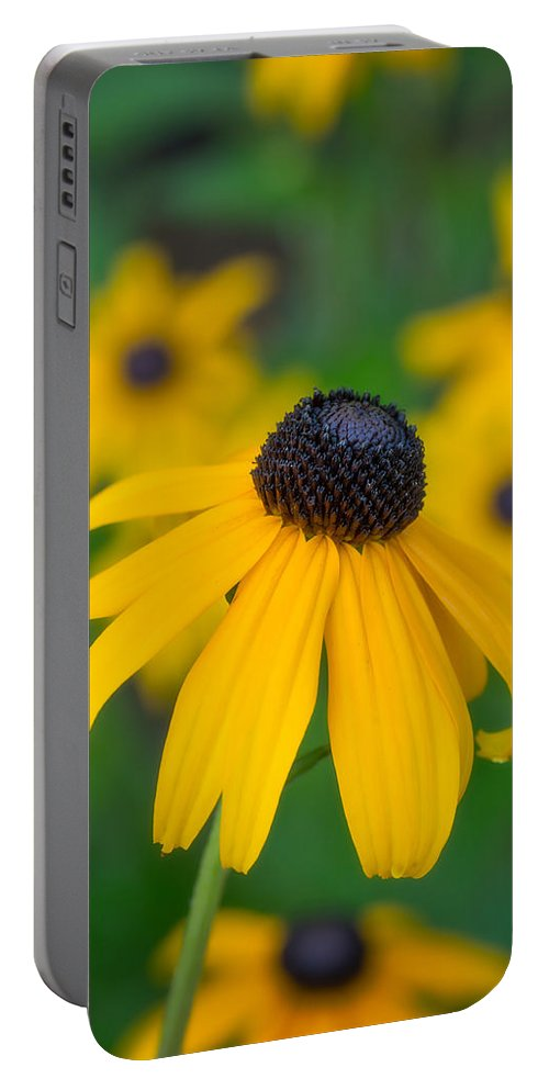 Blackeyed Susan Portable Battery Charger featuring the photograph Blackeyed Susan by David Kay