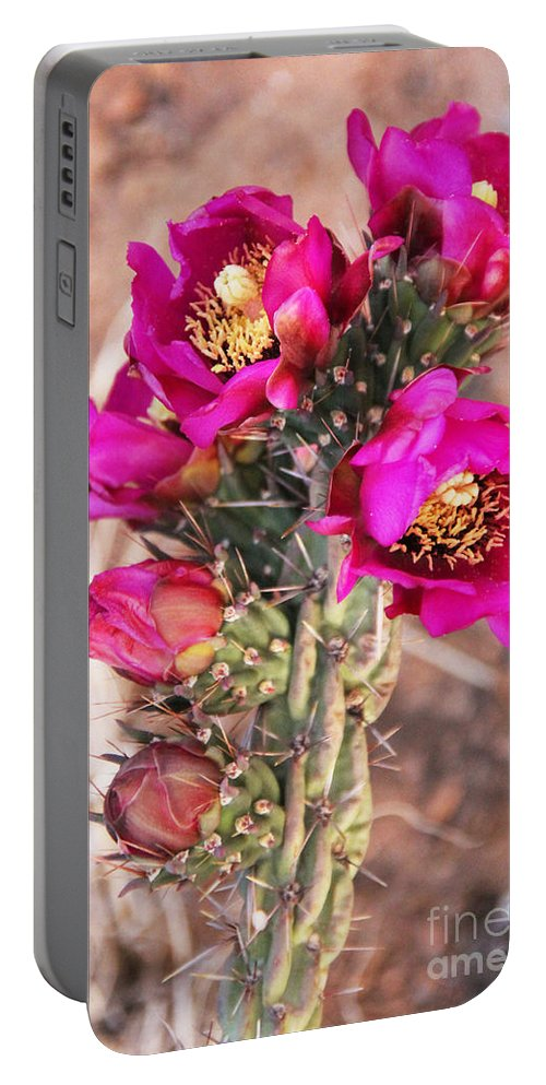 Santa Fe Portable Battery Charger featuring the photograph Blooming Cactus by Jemmy Archer