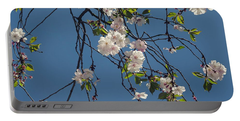 Spring Portable Battery Charger featuring the photograph Blooming Trees by TouTouke A Y