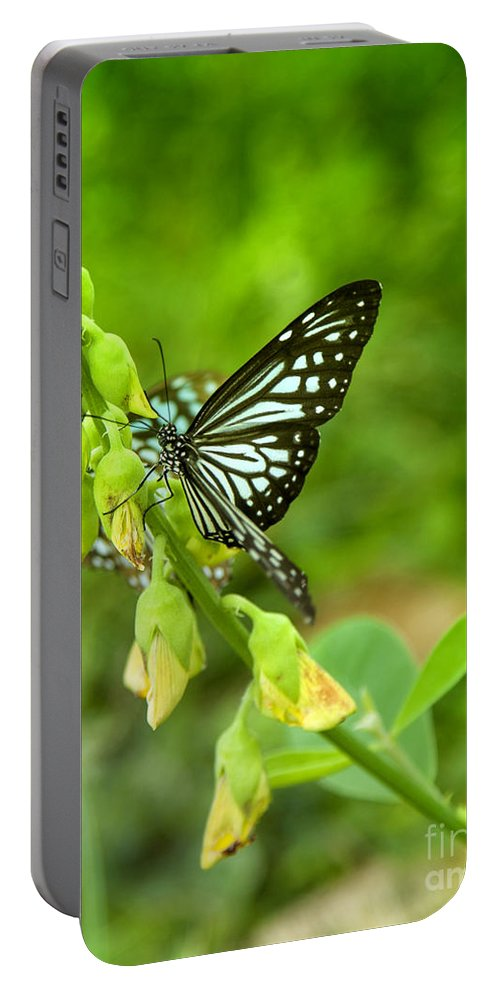 Butterfly Portable Battery Charger featuring the photograph Blue Butterflies In The Green Garden by Gina Koch