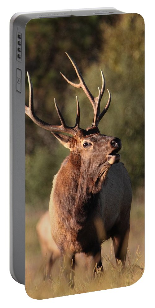 Elk Portable Battery Charger featuring the photograph Bugling Bull Elk by Bruce J Robinson