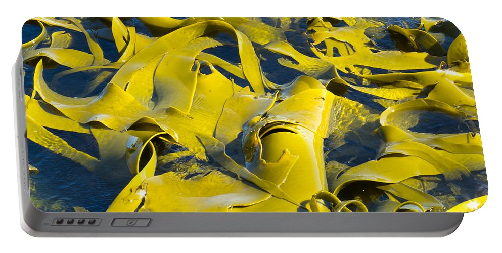 Abstract Portable Battery Charger featuring the photograph Bull Kelp Blades On Surface Background Texture by Stephan Pietzko
