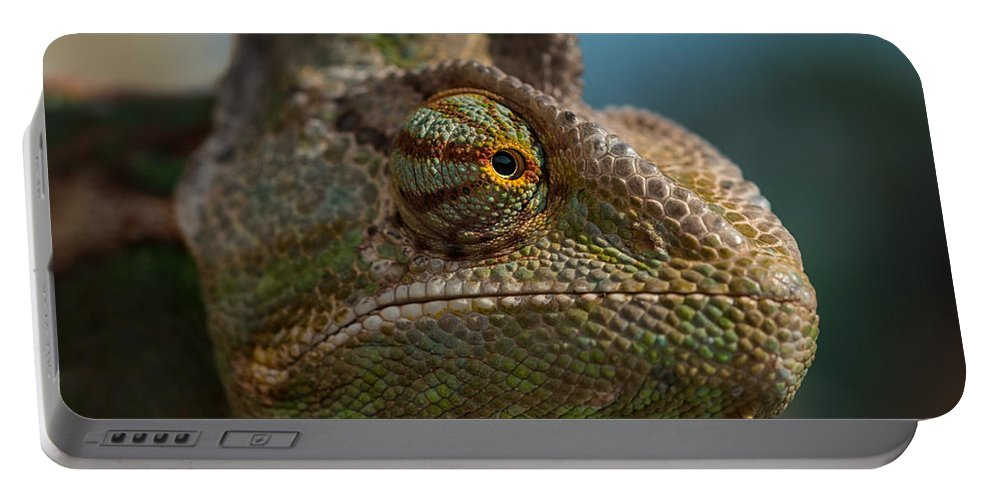 Animal Portable Battery Charger featuring the photograph Chameleon by TouTouke A Y