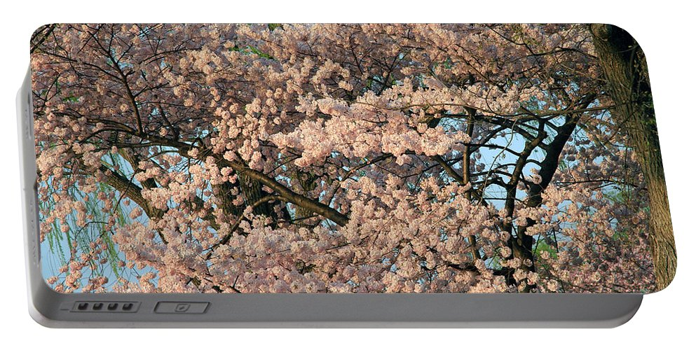 Cherry Blossom Portable Battery Charger featuring the photograph Cherry Blossoms In Pink And Brown by Cora Wandel