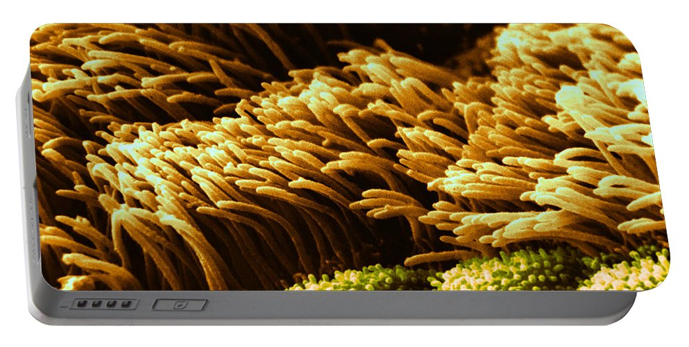 Science Portable Battery Charger featuring the photograph Cilia In Lung, Sem by David M. Phillips