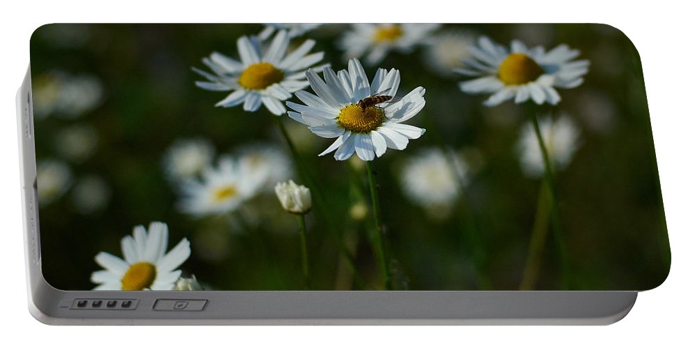 Finland Portable Battery Charger featuring the photograph Corn Chamomile by Jouko Lehto