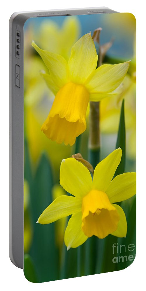 Daffodil Portable Battery Charger featuring the photograph Daffodils by Lee Avison