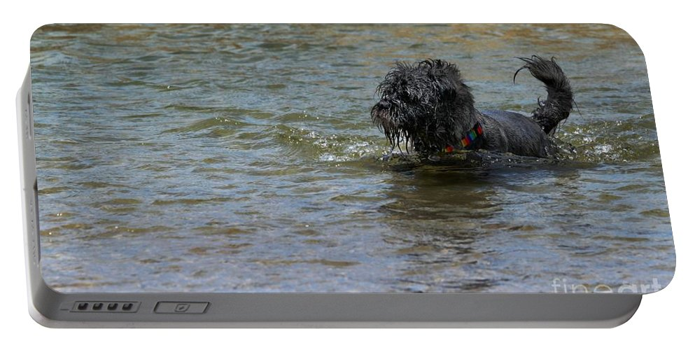 Dog Portable Battery Charger featuring the photograph Dog Ball Water by Henrik Lehnerer