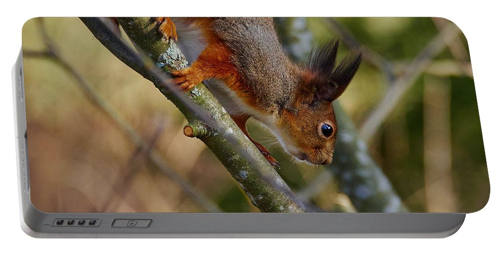 Lehto Portable Battery Charger featuring the photograph Eurasian Red Squirrel by Jouko Lehto