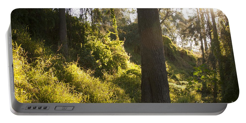 Autumn Portable Battery Charger featuring the photograph Fantasy Forest by Tim Hester