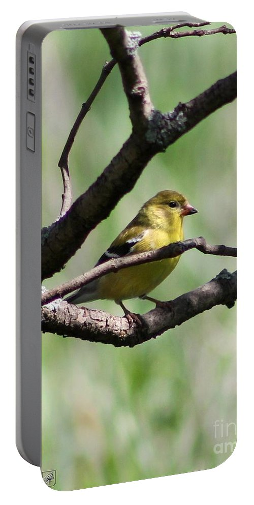 American Goldfinch Portable Battery Charger featuring the photograph Female American Goldfinch by J McCombie