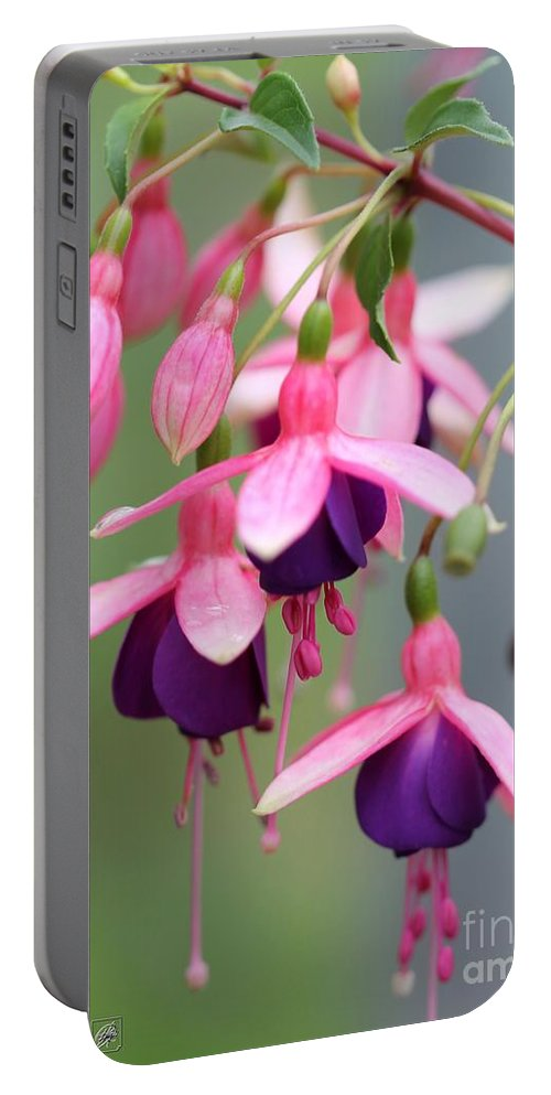 Mccombie Portable Battery Charger featuring the photograph Fuchsia Named Lambada by J McCombie