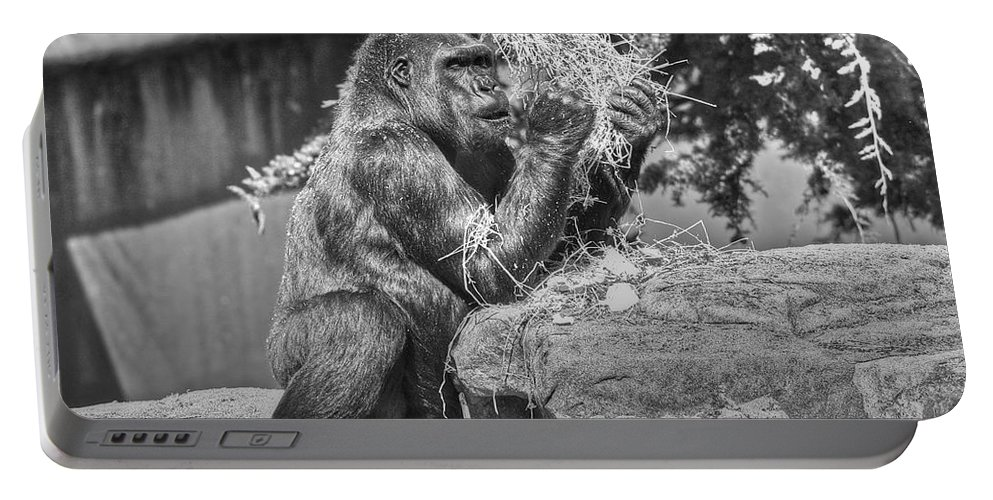 Animals Portable Battery Charger featuring the photograph Gorilla Eats Black And White by SC Heffner