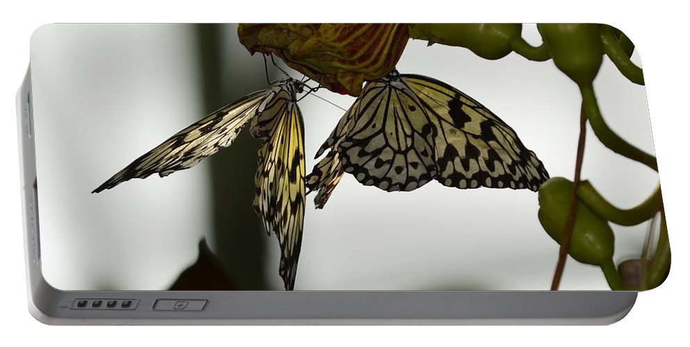 Tree Nymph Portable Battery Charger featuring the photograph Hanging Out by Linda Kerkau