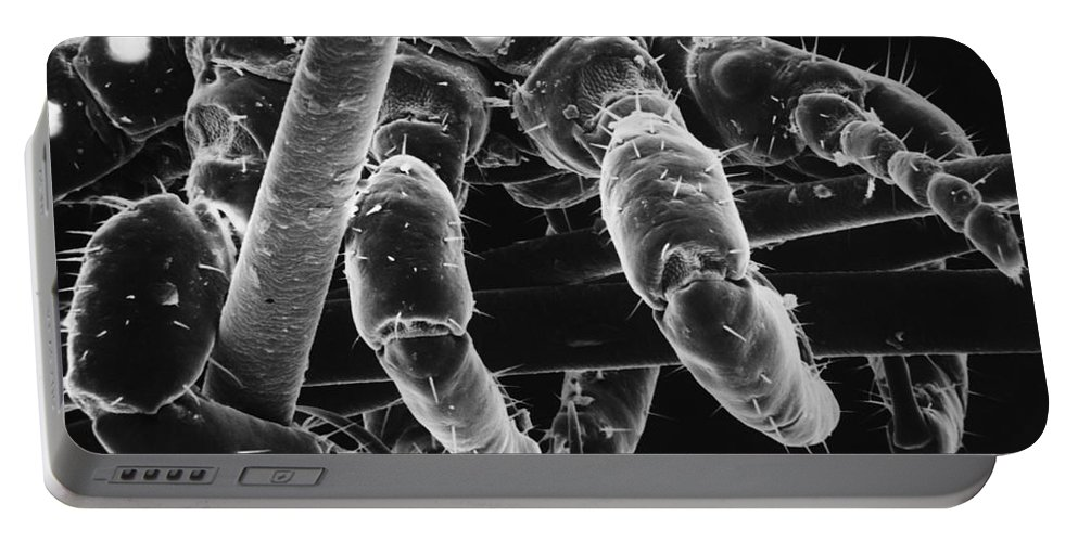 Louse Portable Battery Charger featuring the photograph Human Head Louse by David M. Phillips