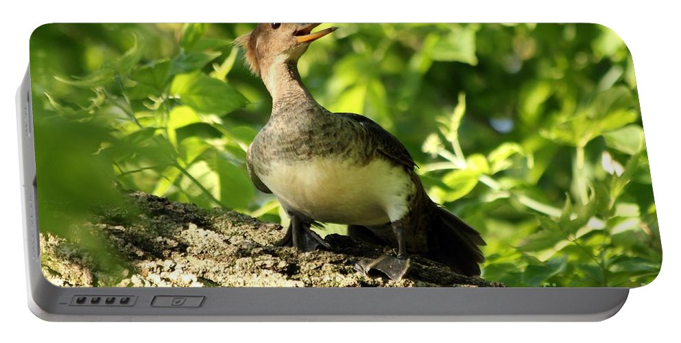 Immature Portable Battery Charger featuring the photograph Immature Hooded Merganser by Lori Tordsen