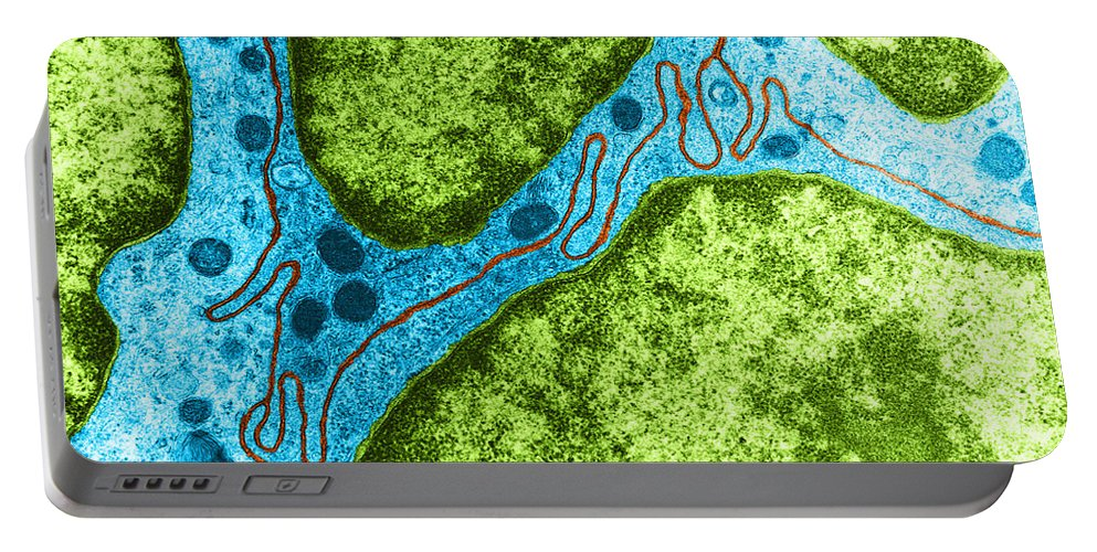 Eukaryote Portable Battery Charger featuring the photograph Interdigitating Membrane, Tem by David M. Phillips