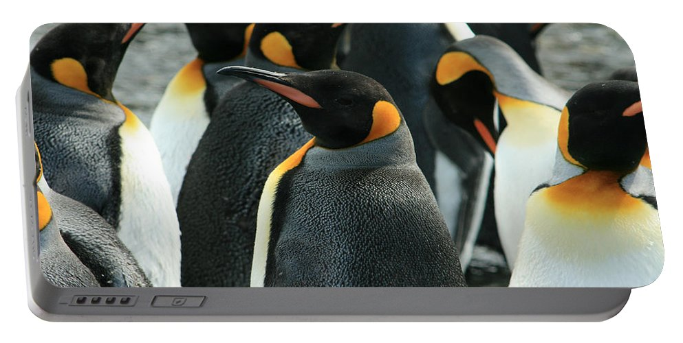 Colony Of Penguins Portable Battery Charger featuring the photograph King Penguin Colony by Amanda Stadther
