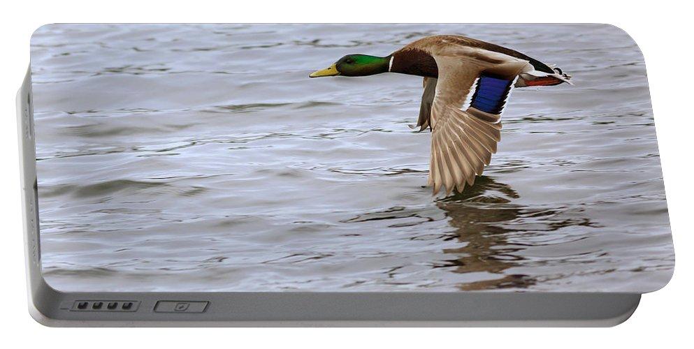 Mallard Portable Battery Charger featuring the photograph Mallard Duck In Flight by Louise Heusinkveld