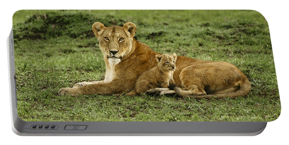 Lion Portable Battery Charger featuring the photograph Mama's Little Baby by Michele Burgess