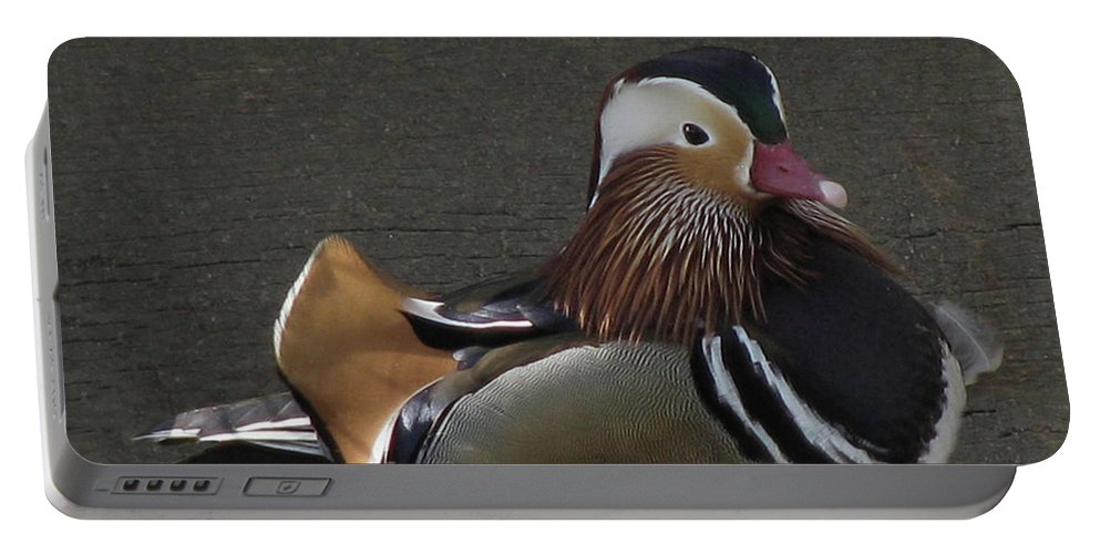 Duck Portable Battery Charger featuring the photograph Mandarin Duck by Donna Brown