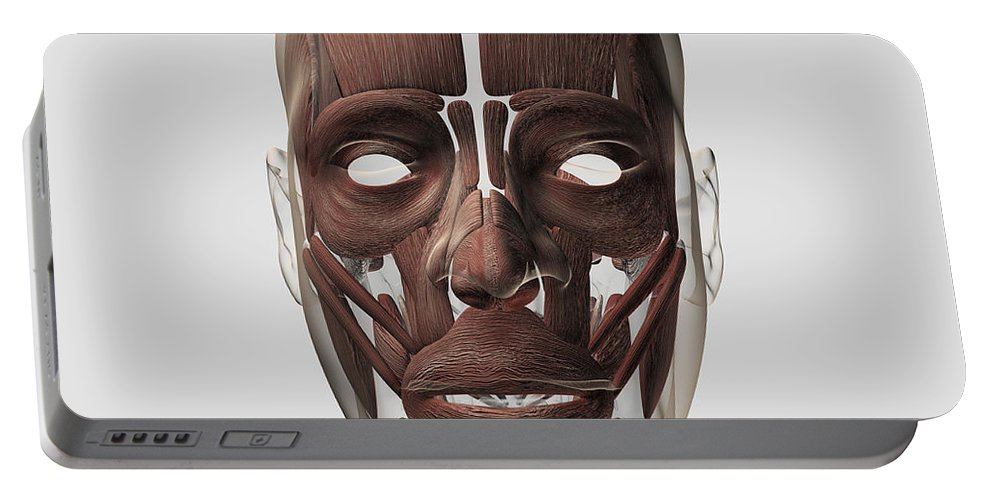 Square Image Portable Battery Charger featuring the digital art Medical Illustration Of Male Facial by Stocktrek Images