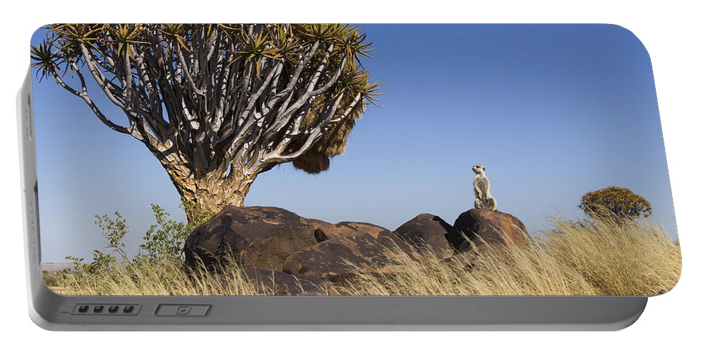 Vincent Grafhorst Portable Battery Charger featuring the photograph Meerkat In Quiver Tree Grassland 2 by Vincent Grafhorst