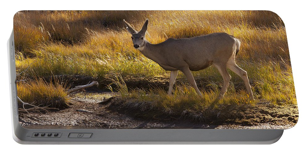 Deer Portable Battery Charger featuring the photograph Mule Deer  #3950 by J L Woody Wooden