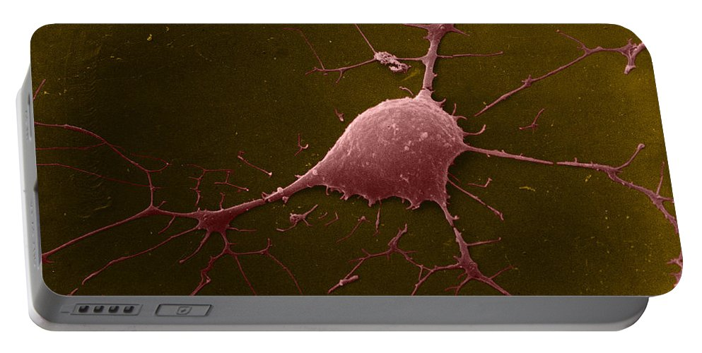 Microscopy Portable Battery Charger featuring the photograph Nerve Cell, Sem by David M. Phillips