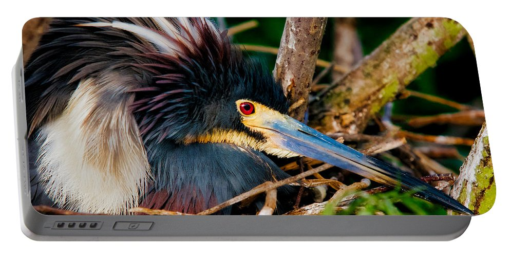 Art Portable Battery Charger featuring the photograph On The Nest by Christopher Holmes