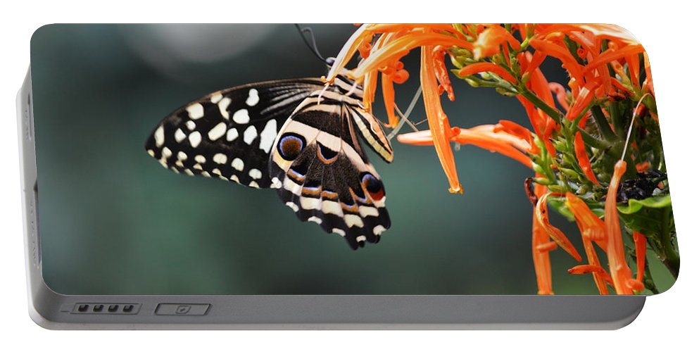Butterfly Portable Battery Charger featuring the photograph Orchard Swallowtail by Linda Kerkau