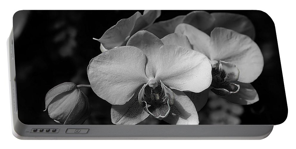 Orchids Portable Battery Charger featuring the photograph Orchids by Joyce Baldassarre
