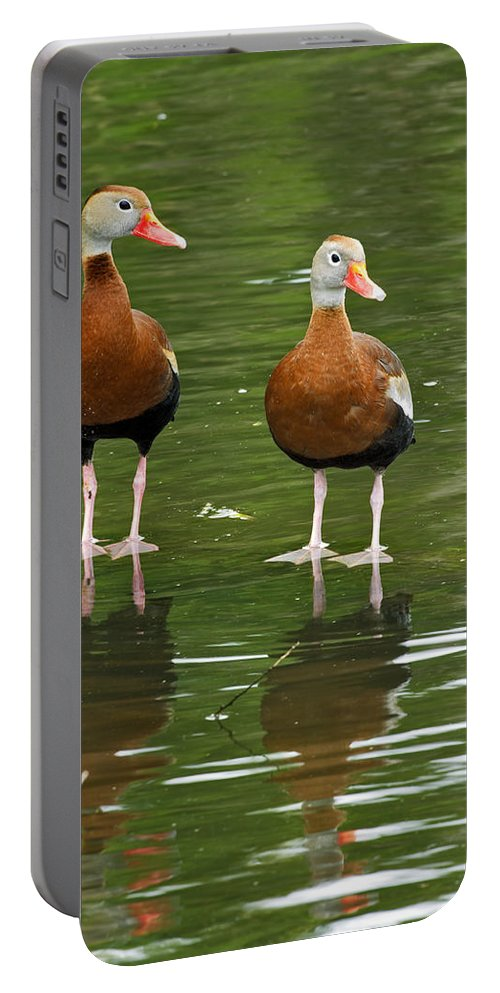 Black Portable Battery Charger featuring the photograph Pair Black-bellied Whistling-ducks by Gary Langley