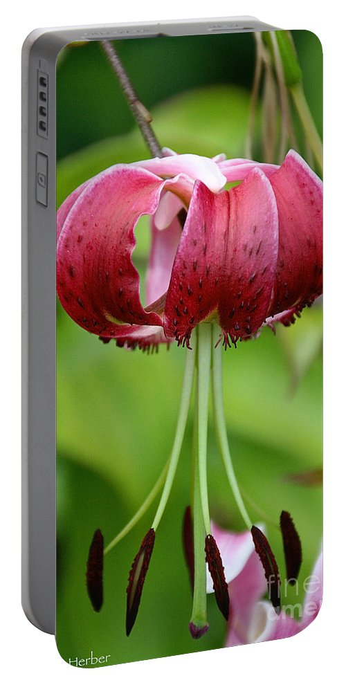 Flower Portable Battery Charger featuring the photograph Pink Curls by Susan Herber