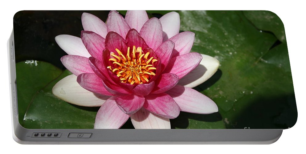 Waterlily Portable Battery Charger featuring the photograph Pink Lotus by Christiane Schulze Art And Photography