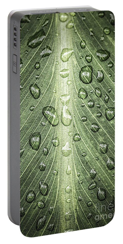 Plant Portable Battery Charger featuring the photograph Raindrops On Green Leaf by Elena Elisseeva