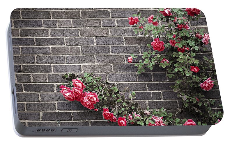 Rose Portable Battery Charger featuring the photograph Roses On Brick Wall by Elena Elisseeva