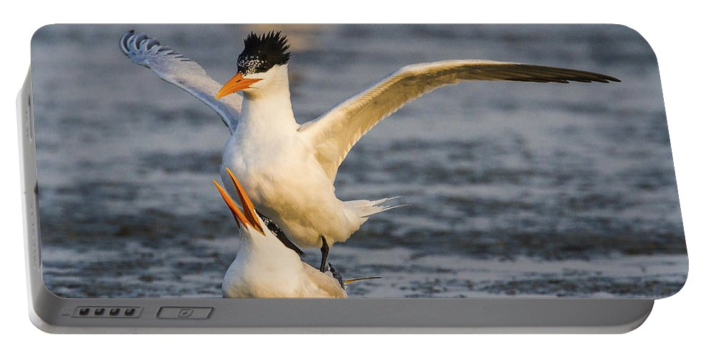 Doug Lloyd Portable Battery Charger featuring the photograph Royal Terns by Doug Lloyd