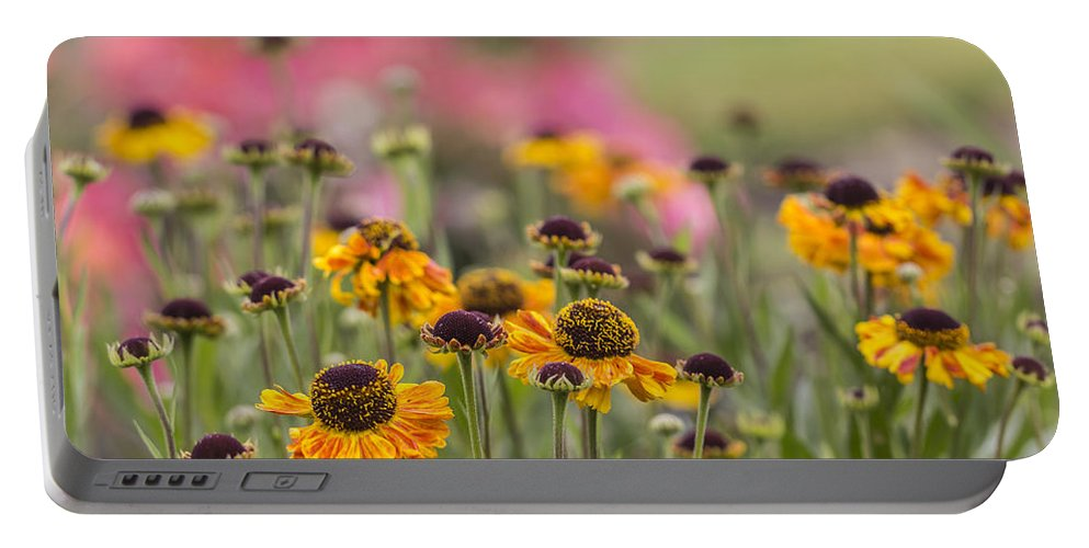 Harry And David Portable Battery Charger featuring the photograph Rudbeckia Joy by Karen Forsyth
