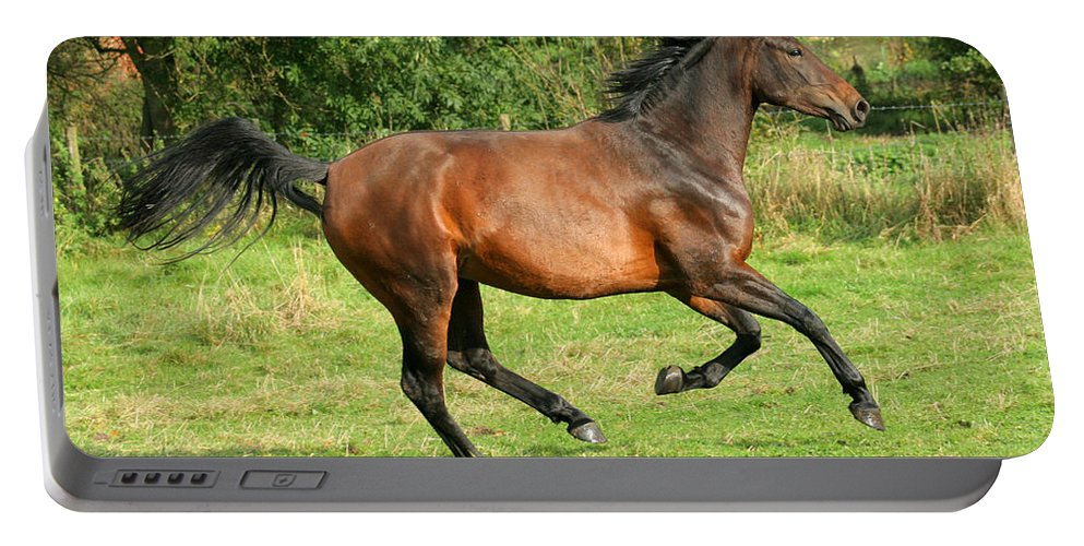 Horse Portable Battery Charger featuring the photograph Running Free by Angel Ciesniarska