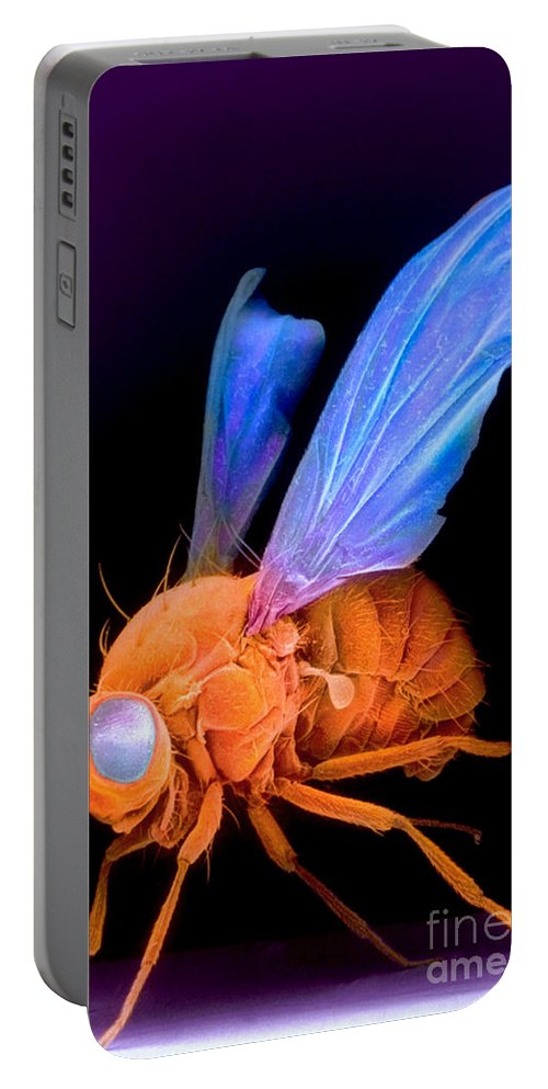 Vertical Portable Battery Charger featuring the photograph Sem Of A Fly Drosophila by David M. Phillips