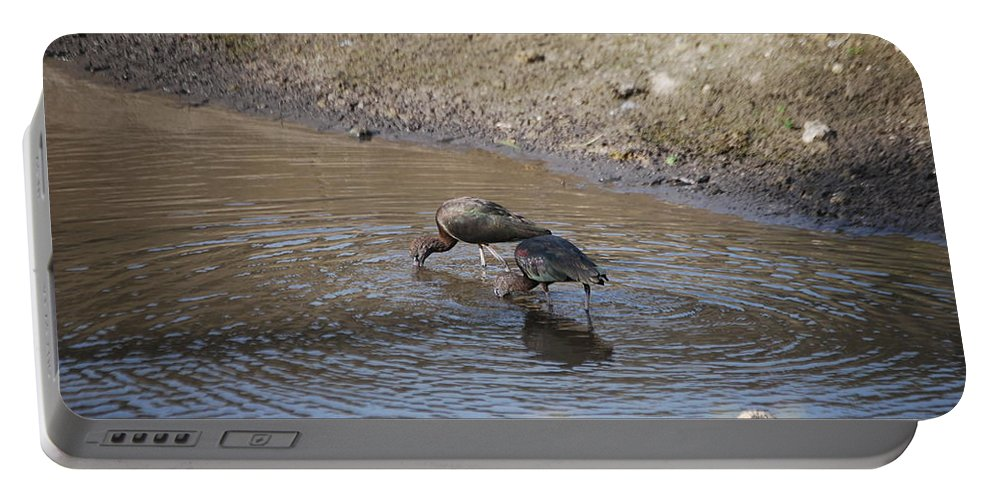 Feeding Together Portable Battery Charger featuring the photograph Shorebirds by Robert Floyd