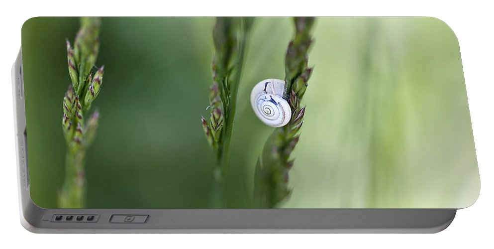 Snail Portable Battery Charger featuring the photograph Snail On Grass by Nailia Schwarz