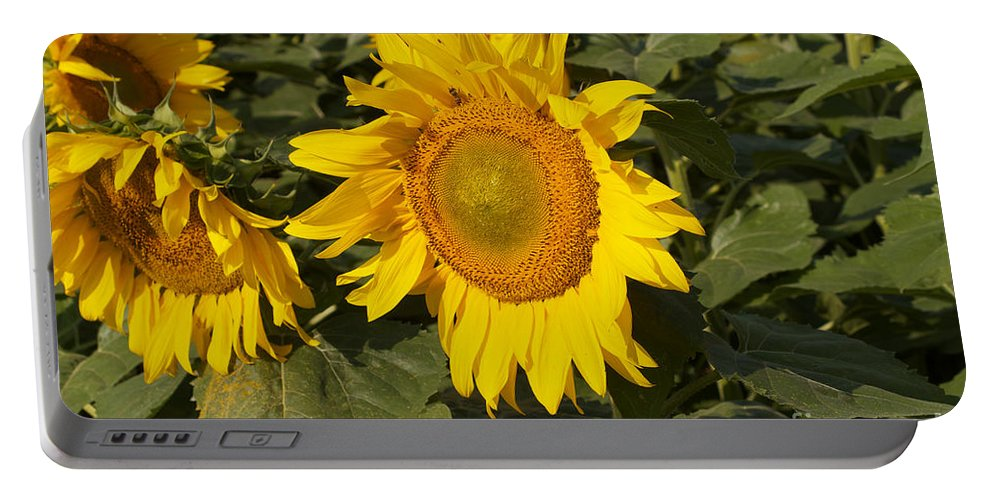 Yellow Portable Battery Charger featuring the photograph Sun Flower by William Norton