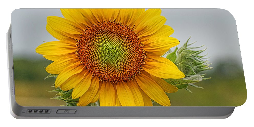 Sunflower Portable Battery Charger featuring the photograph Sunflower by Alan Hutchins