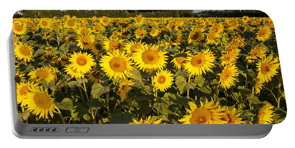 Bright Portable Battery Charger featuring the photograph Sunflowers At Dawn by Brian Jannsen