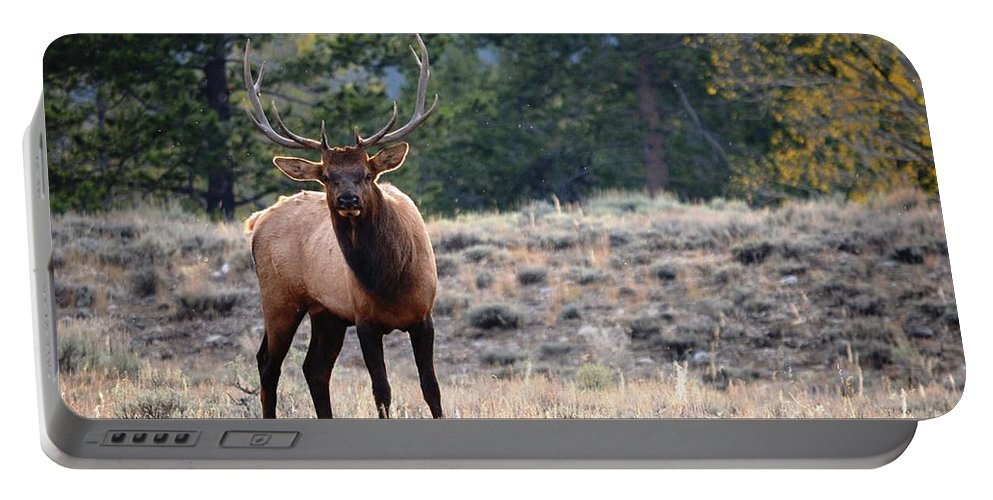 Bull Elk Portable Battery Charger featuring the photograph The Look by Deanna Cagle